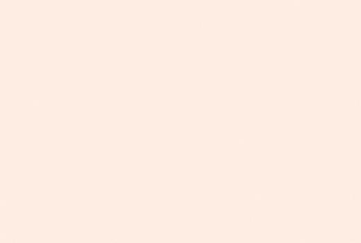 Weißrose
